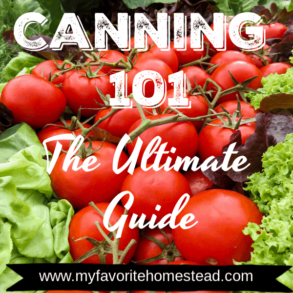 Canning 101: The Ultimate Guide