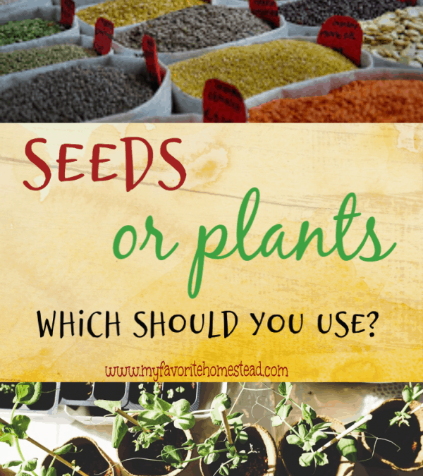 Seeds or Plants: Which Should You Choose?