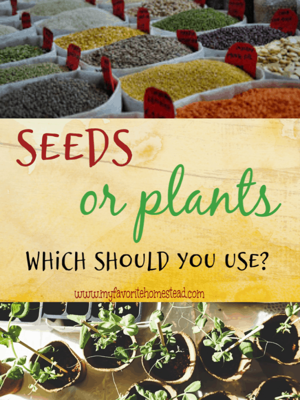 seeds or plants