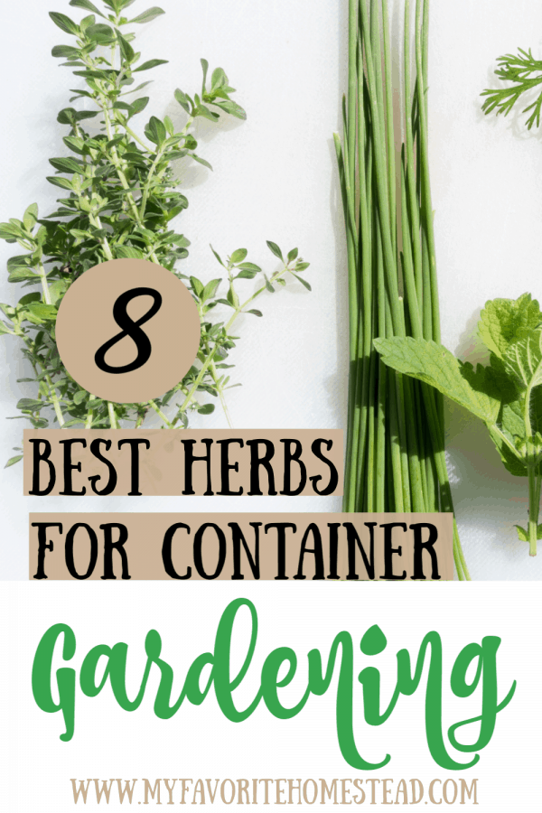 8 best herbs for container gardening