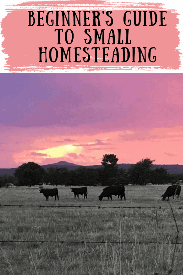 Beginner's Guide to Small Homesteading