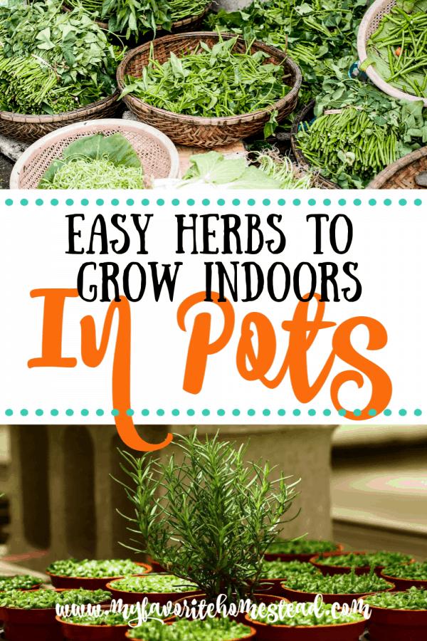 Easy herbs to grow indoors in pots