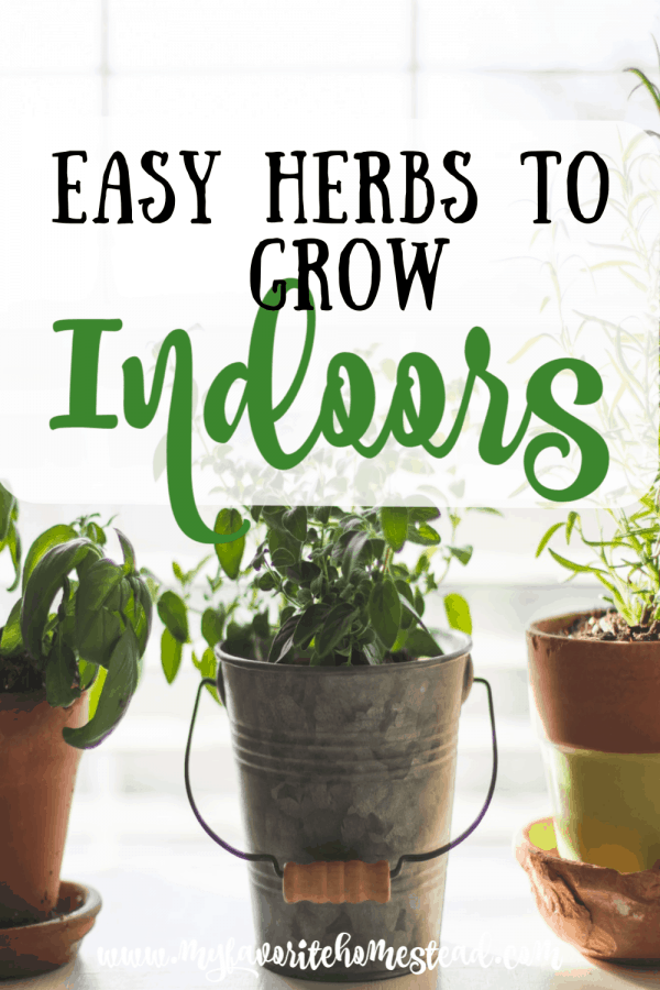 Easy herbs to grow indoors