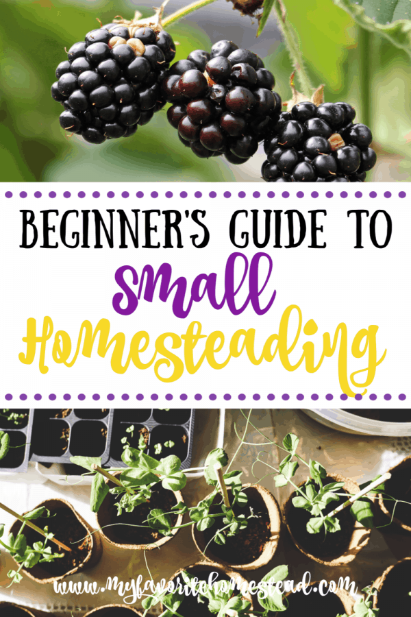 Small Homesteading Beginner's Guide