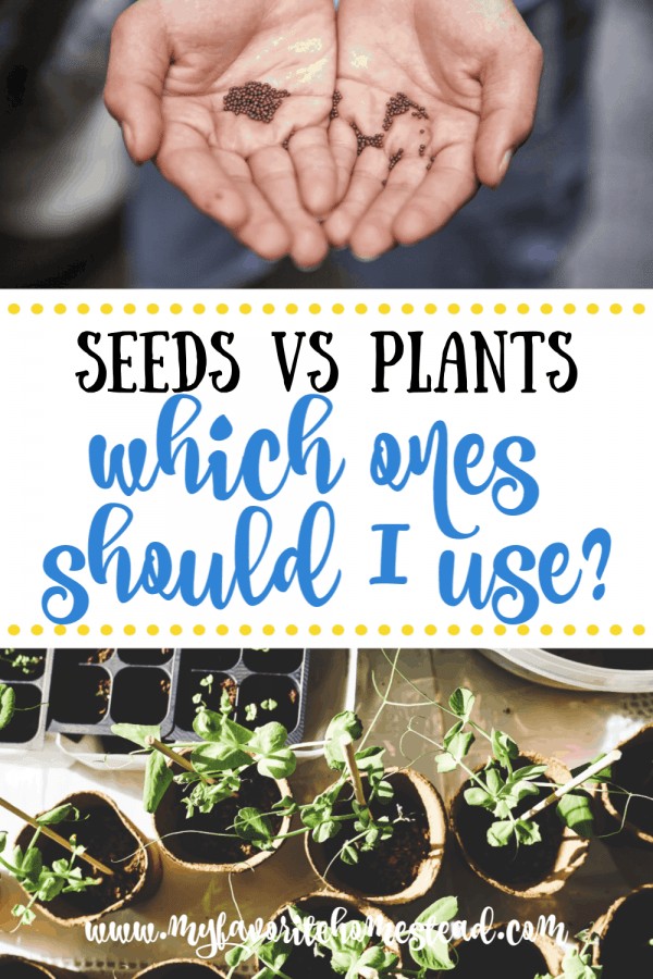 Seeds vs Plants: Which ones Should I Use?