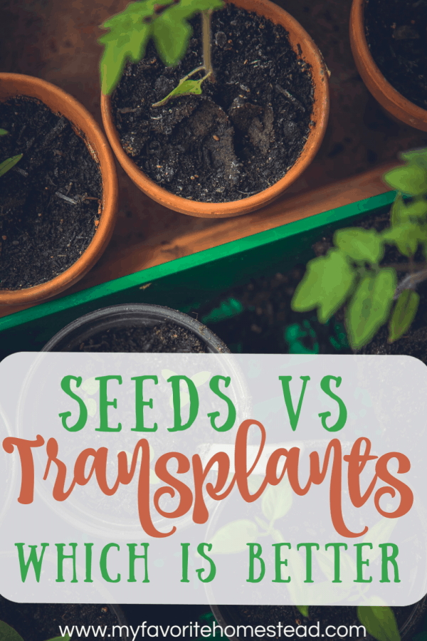 Seeds vs Transplants: which is better?