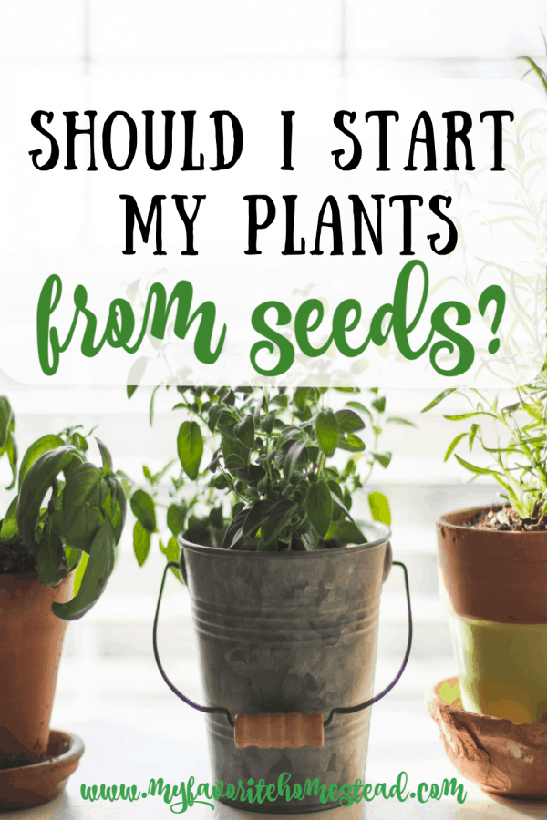 Should I start my Plants from Seeds?