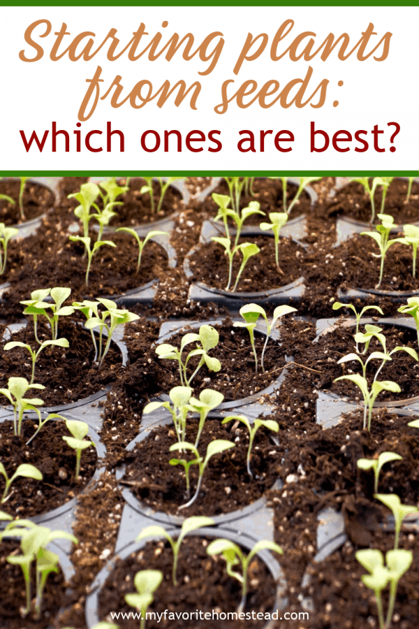 Starting Plants from Seeds: Which Ones are Best?