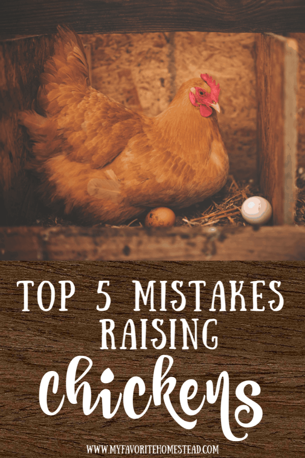 Top 5 Mistakes Raising Chickens