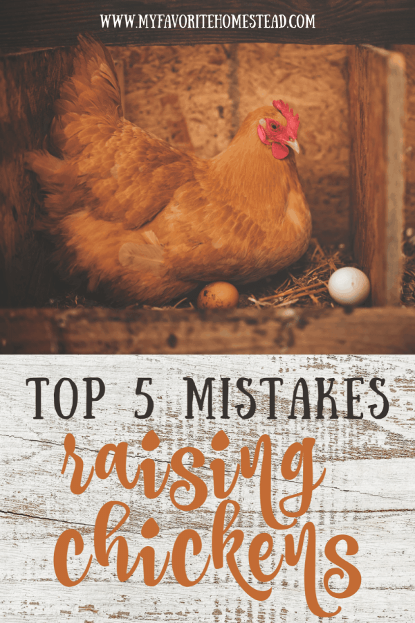 Mistakes Raising Chickens