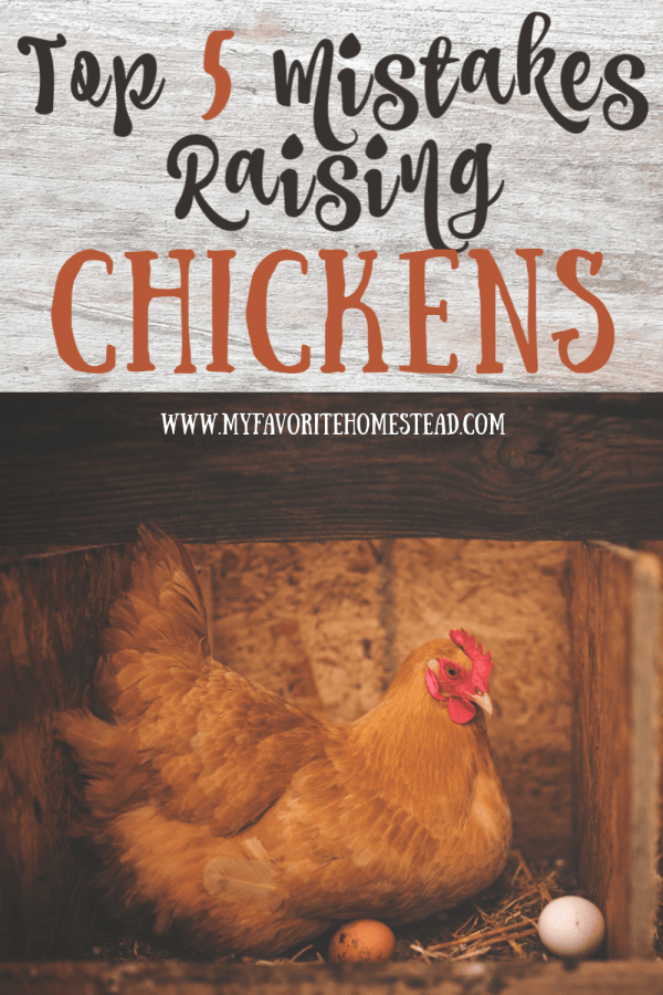 5 Mistakes Raising Chickens