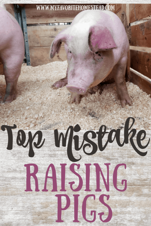 Top Mistake Raising Pigs
