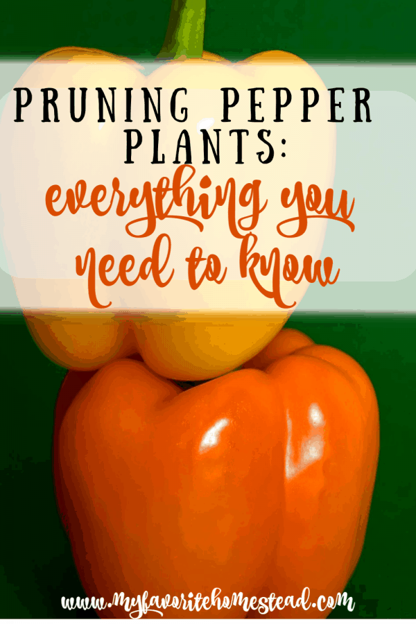 pruning pepper plants: what you need to know