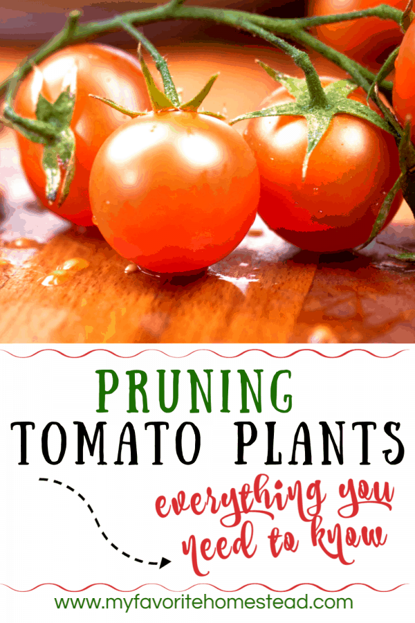 Pruning tomato plants: everything you need to know