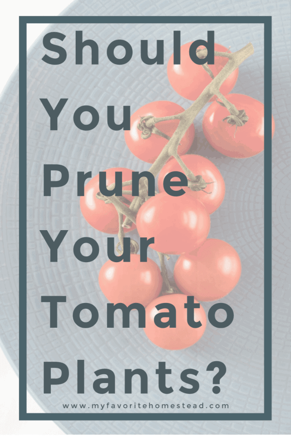Should you prune your tomato plants?
