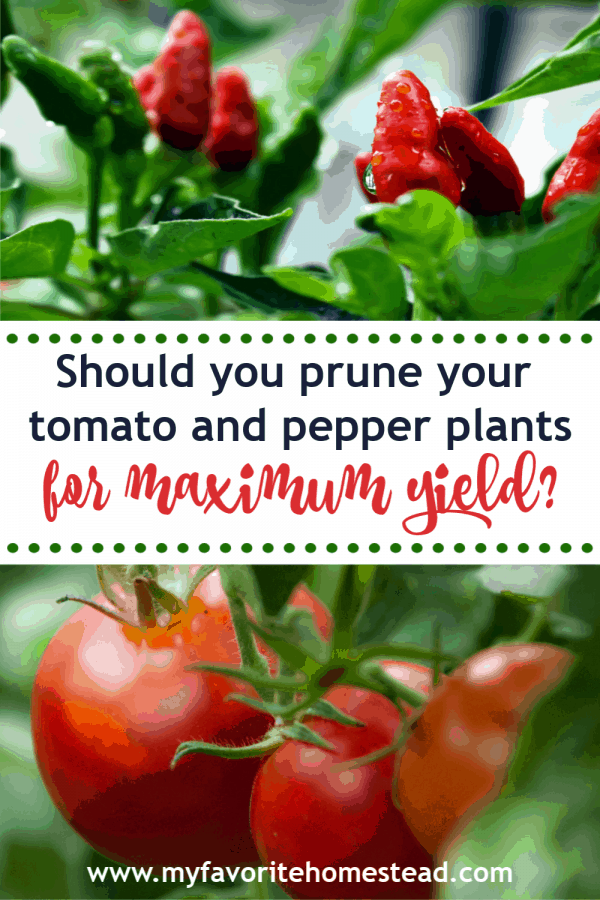 Should you prune your tomato and pepper plants for maximum yield?