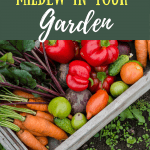 Having trouble with mold & mildew in your vegetable garden this spring? Learn how to deal with mold & mildew on your vegetable plants for a productive garden.