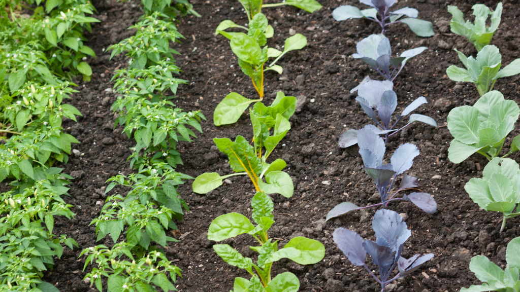 Looking for some garden planning tips? These vegetable garden ideas will help you understand how much space each plant needs to have a successful backyard veggie garden!