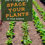 Looking to get the most out of your backyard veggie garden this growing season? Understand how much space your plants will need to plant the right amount and increase yield. Growing vegetable plants and reaping the harvest is a rewarding experience. Not only will your family thank you for these fresh veggies, so will your waistline!