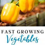Looking for heat resistant vegetables to grow, without having the plants die? In this article, we explain heat tolerant vegetables to grow this summer and that survive hot climates, perfect for beginner gardeners and homesteaders. Tap to read more from My Favorite Homestead | Gardening and Homesteading Tips