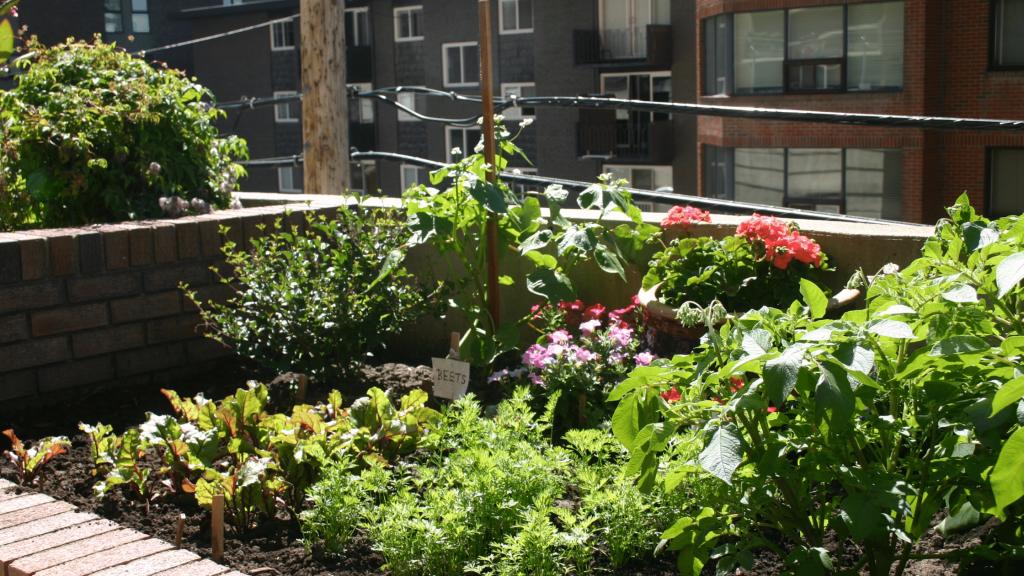 plants in a city garden