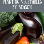 Ready to grow food in the right season, so those vegetables don't taste bland? In this article, we explain how planting vegetables by season and vegetable garden planning can produce tasty vegetables, perfect for beginning gardeners and homesteaders. Tap to read more from My Favorite Homestead   Gardening and Homesteading Tips