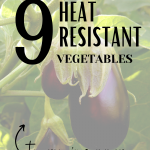 Looking for heat resistant vegetables for your hot climate, without having the plants die? In this article, we explain heat tolerant plants to grow and that survive hot climates, perfect for beginner gardeners and homesteaders. Tap to read more from My Favorite Homestead | Gardening and Homesteading Tips