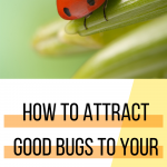 ladybug with text how to attract good bugs to your backyard garden